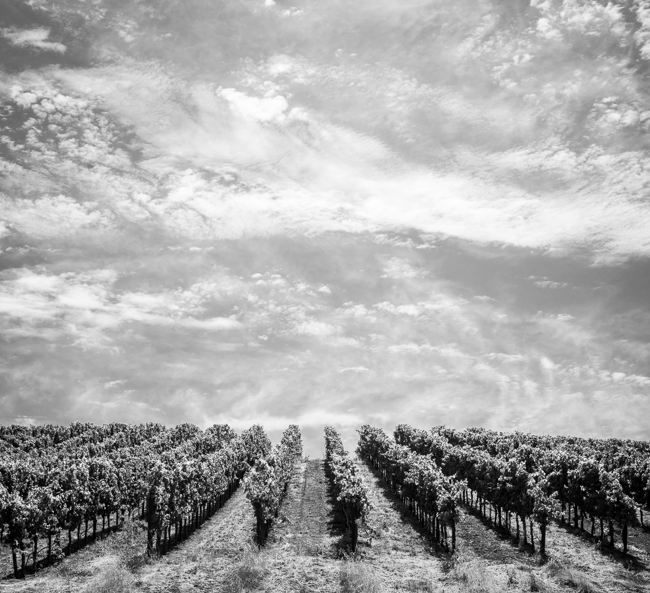 Copain Winery-4
