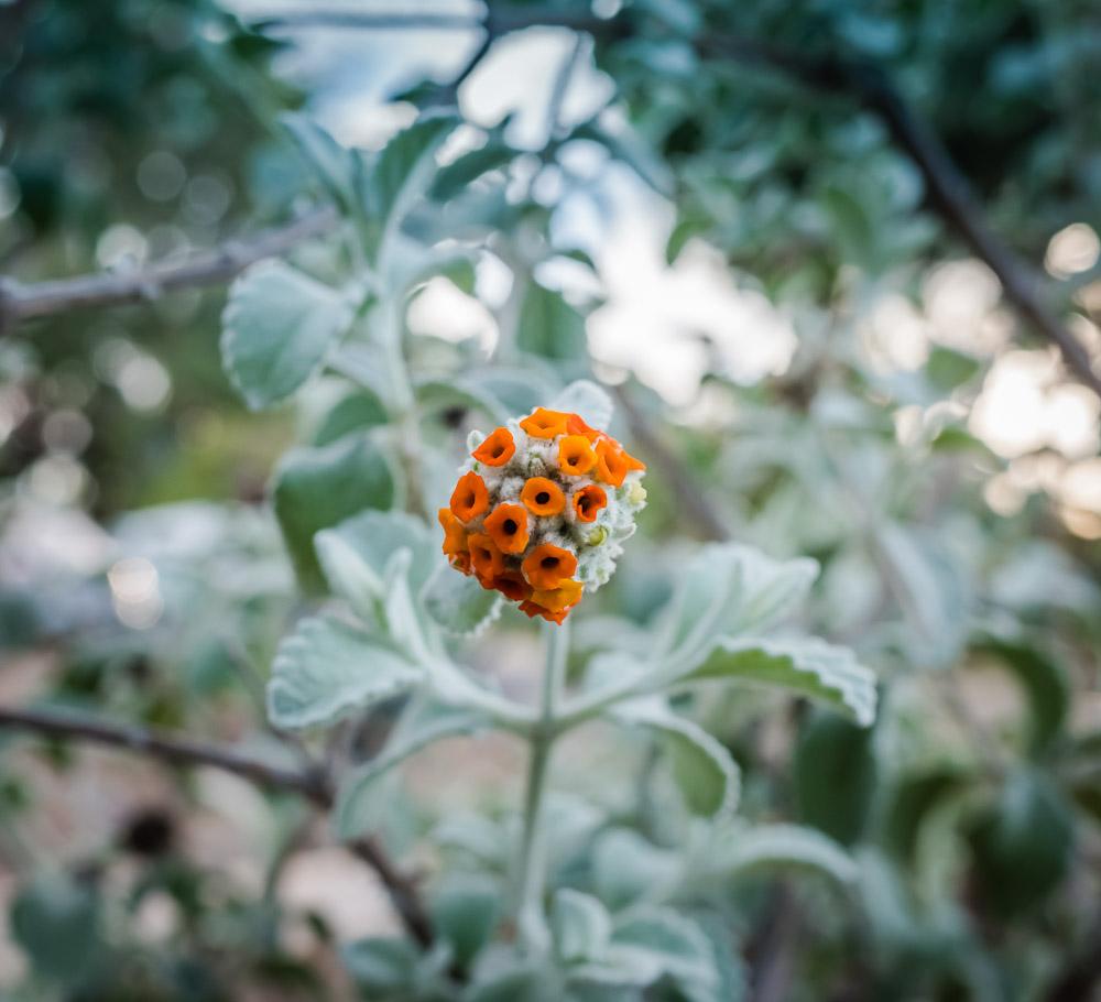 Random Friday Photos of Flowers-3