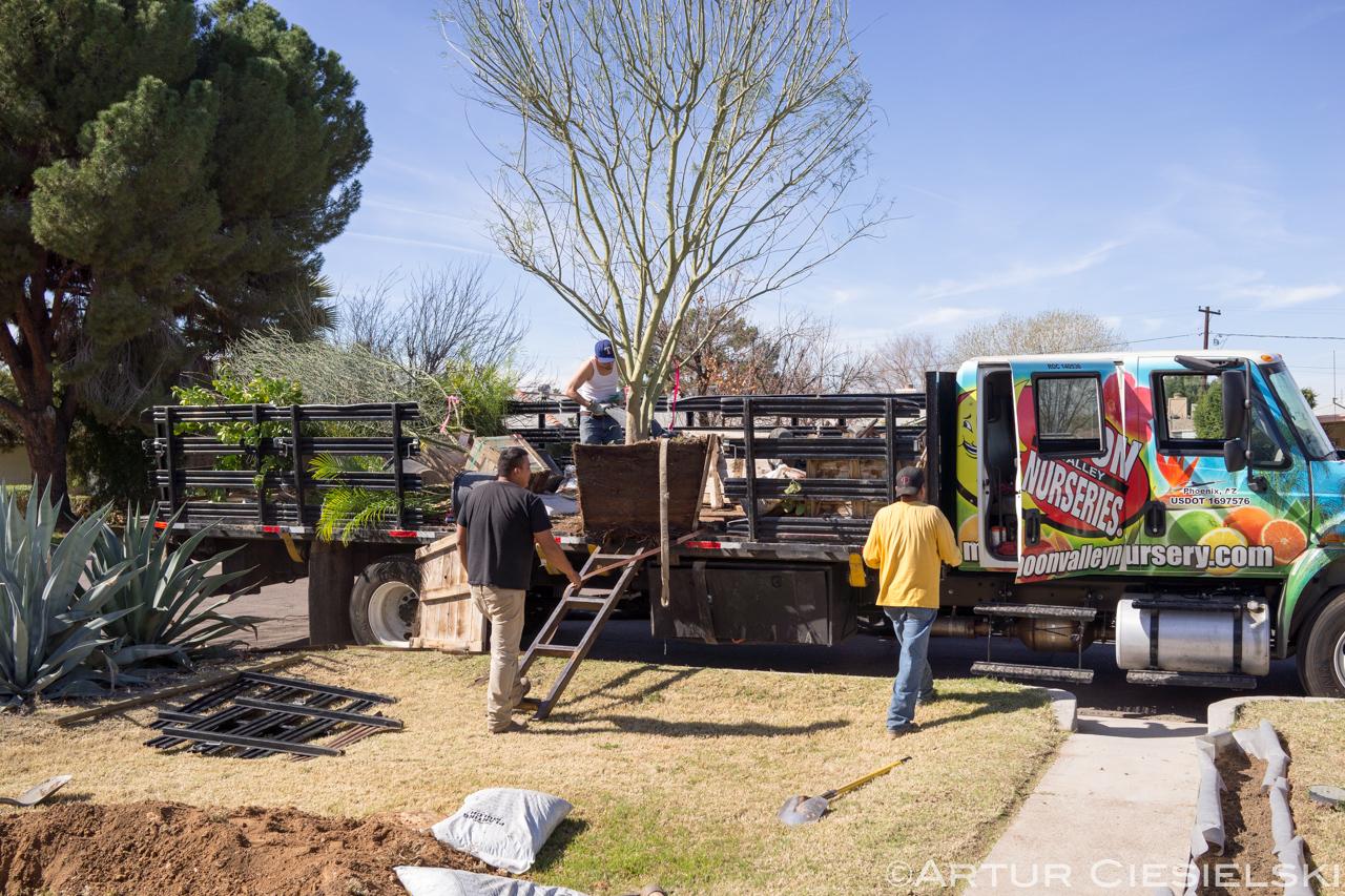 instal of the palo verde in phoenix-2