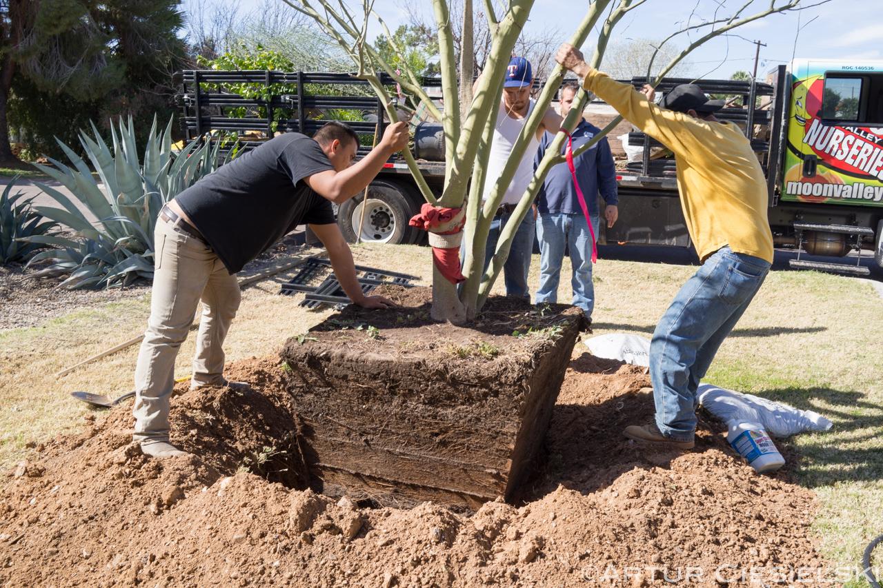 instal of the palo verde in phoenix-7