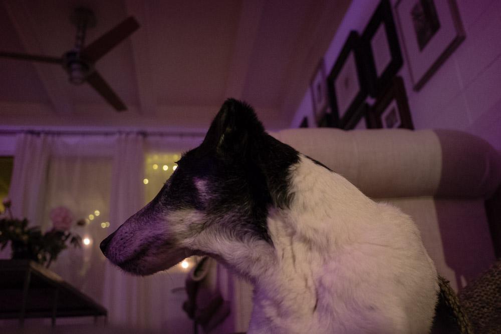monday dog fun-5