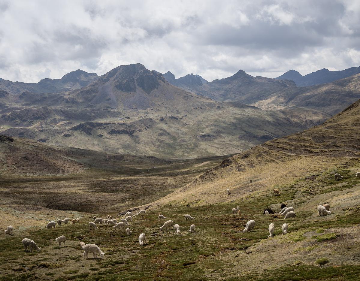 patacancha trail-2