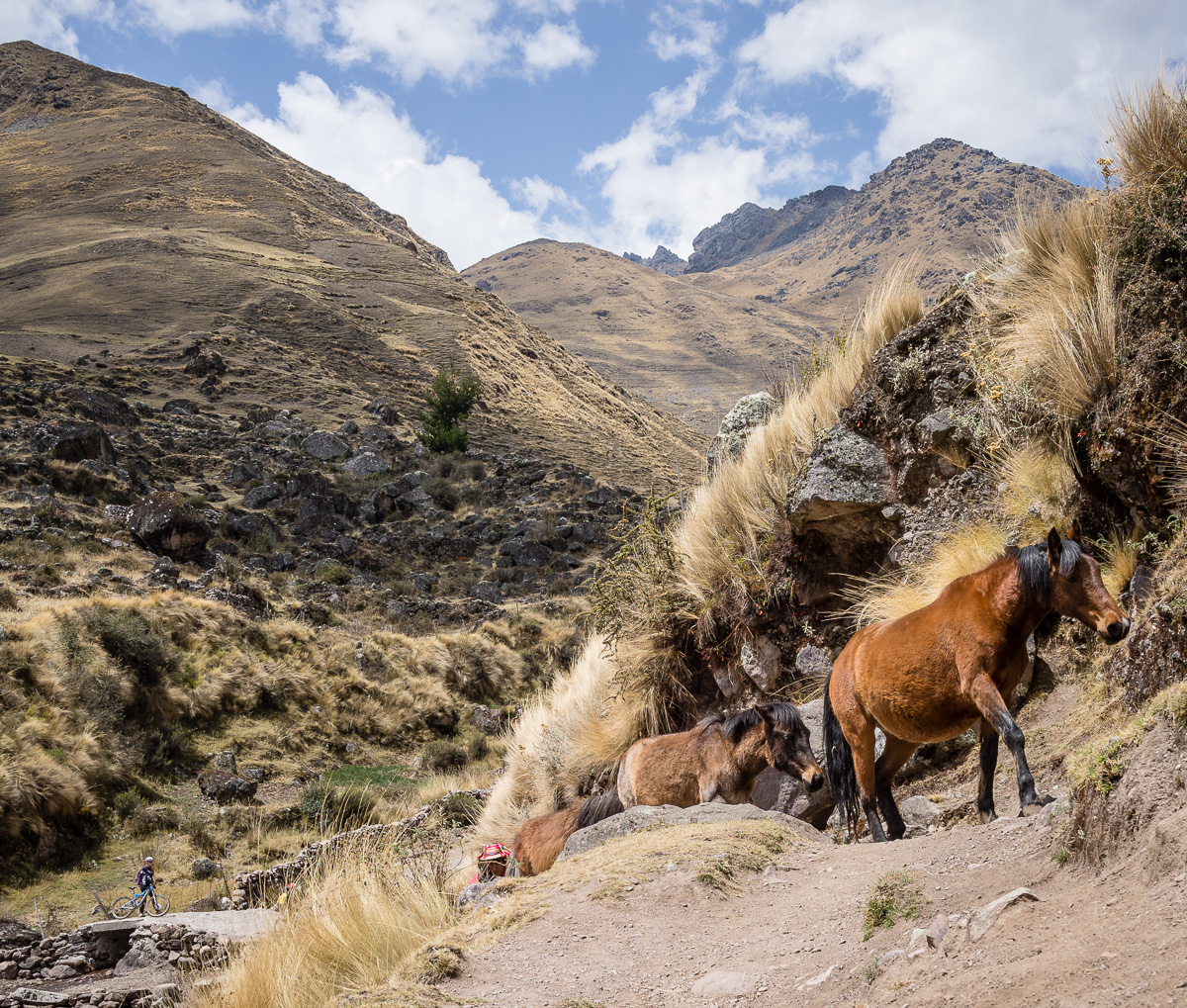 patacancha trail-7